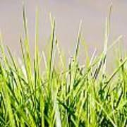 Grass Blades Art Print