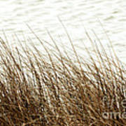 Grass Down By The Shore Of Virginia Beach Art Print