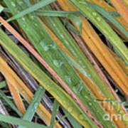 Grass Droplets Art Print