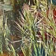 Grass In Sunlight Art Print