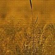 Grass In The Light Of The Rising Sun Art Print