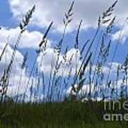 Grass Meets Sky Art Print