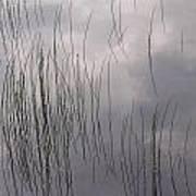 Grass Mirrors Sky Art Print