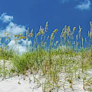 Grass On The Beach, Bill Baggs Cape Art Print