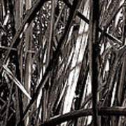Grasses 2 Art Print by Colleen Cannon