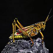 Grasshopper Portrait. Blue Cypress Lake Art Print