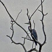 Gray Bird Art Print