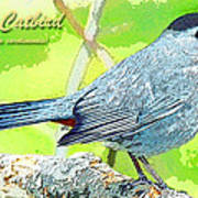 Gray Catbird Digital Art Art Print