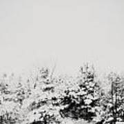Gray December Winter Snow On Trees Photograph Art Print