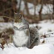 Gray Squirrel In Snow Art Print