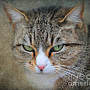 Gray Tabby Cat Art Print by Jai Johnson