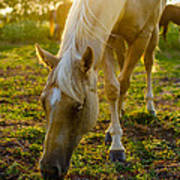 Grazing At Sunset Art Print