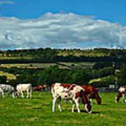 Grazing Cows Art Print