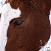 Grazing Horse  Art Print by Kimberly Maiden