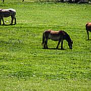 Grazing Horses Art Print