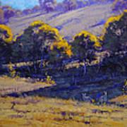 Grazing Kangaroos Art Print