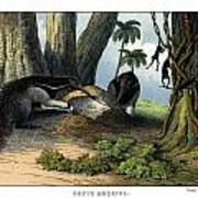 Great Anteater Art Print