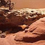 Great Basin Rattlesnake Art Print