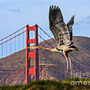 Great Blue At The Golden Gate Art Print