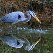 Great Blue Heron #1 Art Print