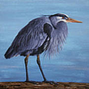 Great Blue Heron Print by Crista Forest