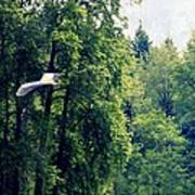 Great Blue Heron Flying Past The Trees Above Trojan Pond 2 Art Print