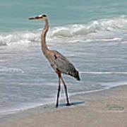 Great Blue Heron On Beach Art Print