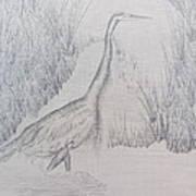 Great Blue Heron Pencil Drawing Art Print by Debbie Nester