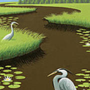 Great Blue Herons On A Lily Pad Pond Art Print