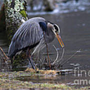 Great Blue On The Clinch River II Art Print