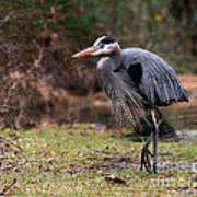 Great Blue On The Clinch River IIi Art Print