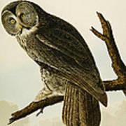 Great Cinereous Owl Art Print
