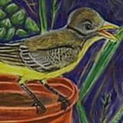 Great Crested Flycatcher Art Print