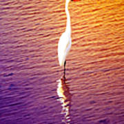 Great Egret At Sundown  Art Print