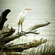 Great Egret On A Fallen Tree Art Print by Joan McCool