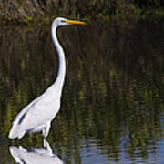 Great Egret Standing Out Art Print