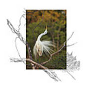 Great Egret - Stretch Art Print