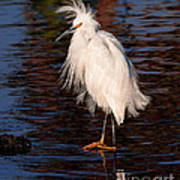 Great Egret Walking On Water Art Print