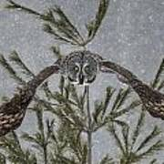 Great Grey Owl Pictures 16 Art Print