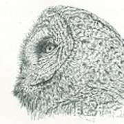 Great Grey Owl Art Print