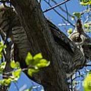 Great Horned Owl 5 Art Print