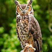 Great Horned Owl Art Print