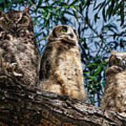 Great Horned Owl Family Art Print