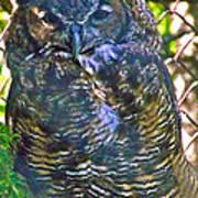 Great Horned Owl In Salmonier Nature Park-nl Art Print