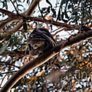 Great Horned Owl Looking Down  Art Print