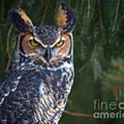 Great Horned Owl Art Print by Mike Mulick