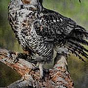 Great Horned Owl On Branch Art Print