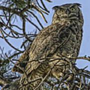 Great Horned Owl Art Print by Tom Wilbert