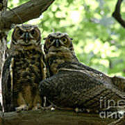 Great Horned Owls Art Print
