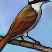 Great Kiskadee Bird Art Print